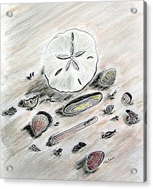Sea Shells Acrylic Print by Diane Frick