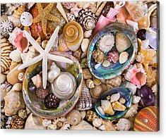Sea Shells Acrylic Print by Jim Hughes
