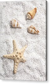 Sea Shells Acrylic Print