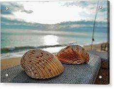 Sea Shells Acrylic Print by Josy Cue
