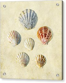 Sea Shells Acrylic Print by Paul Grand