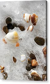 Sea Shells Rocks And Ice Acrylic Print by Matt Suess