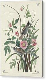 Sea-side Finch Acrylic Print
