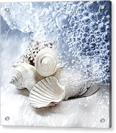 Sea Snails Acrylic Print by Maika 777