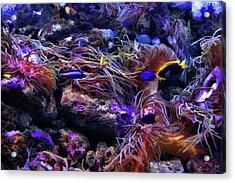 Sea Spaghetti  Acrylic Print