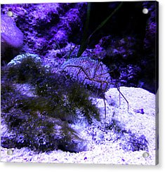 Acrylic Print featuring the photograph Sea Spider by Francesca Mackenney