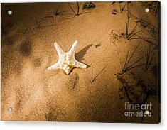 Sea Star Scene Acrylic Print by Jorgo Photography - Wall Art Gallery