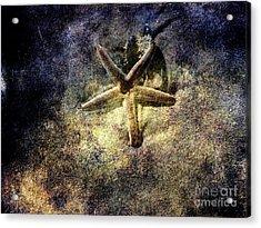 Sea Star Acrylic Print by Susanne Van Hulst