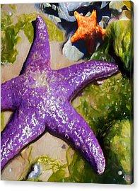 Sea Stars Acrylic Print