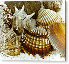 Sea Treasures Acrylic Print by Frank Tschakert