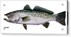 Sea Trout Acrylic Print