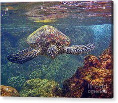 Sea Turtle - Close Up Acrylic Print