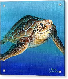 Sea Turtle 1 Of 3 Acrylic Print