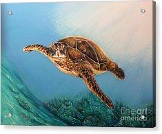 Sea Turtle 1 Acrylic Print