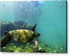 Acrylic Print featuring the photograph Sea Turtle #5 by Anthony Jones