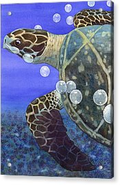 Sea Turtle Acrylic Print by Catherine G McElroy