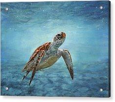 Sea Turtle Acrylic Print by David Stribbling