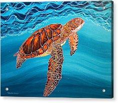 Sea Turtle Acrylic Print by Debbie Chamberlin
