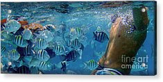 Sea Turtle Fish And Oh My... Acrylic Print