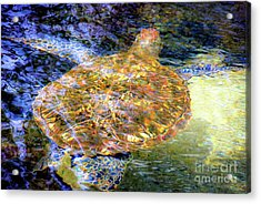 Acrylic Print featuring the photograph Sea Turtle In Hawaii by D Davila