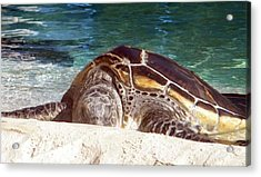 Acrylic Print featuring the photograph Sea Turtle Resting by Amanda Eberly-Kudamik