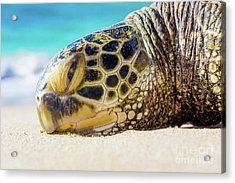 Acrylic Print featuring the photograph Sea Turtle Resting At The Beach by Hans- Juergen Leschmann