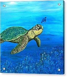 Sea Turtle Acrylic Print by Sabrina Zbasnik
