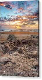 Sea Turtle Trails Acrylic Print