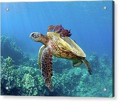 Sea Turtle Underwater Acrylic Print by M.M. Sweet