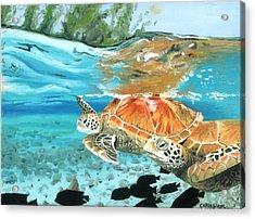 Sea Turtles Acrylic Print by Chris Wiese