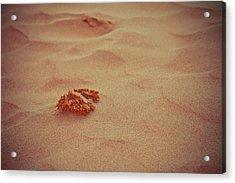 Sea Urchin Ashore Acrylic Print
