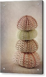 Sea Urchins Acrylic Print by Carol Leigh