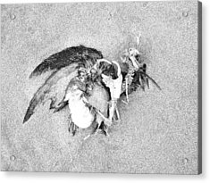 Seabird Fatalities-1 Acrylic Print