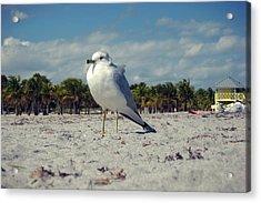 Seabird Acrylic Print by JAMART Photography