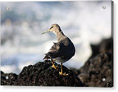 Seabird Acrylic Print by Mary Haber
