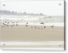 Seabirds On Hilton Head Shoreline Acrylic Print by Angela Rath