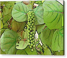 Seagrape Acrylic Print by George I Perez
