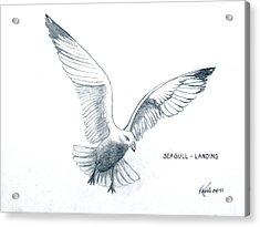 Seagull - Landing Acrylic Print by Frederic Kohli