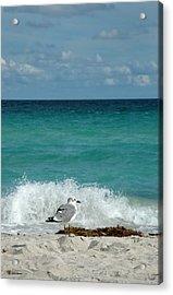 Seagull - South Beach Miami Acrylic Print