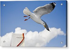 Seagull  Above Ferryboat Acrylic Print by Isaac Silman