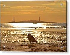 Seagull Admiring Thacher Island Gloucester Ma Good Harbor Beach Acrylic Print