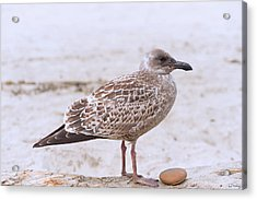 Seagull And His Rock Acrylic Print