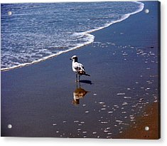 Acrylic Print featuring the photograph Seagull At Myrtle Beach  by Beth Akerman