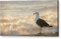 Seagull At Sunrise Acrylic Print