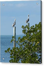 Seagull Acrylic Print by Audrey Venute