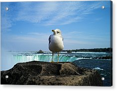Seagull Checking Out The Photographers Acrylic Print