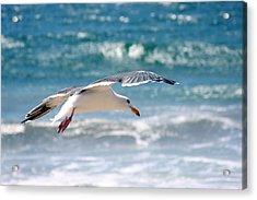 Seagull Flight Acrylic Print by Stormshade Designs