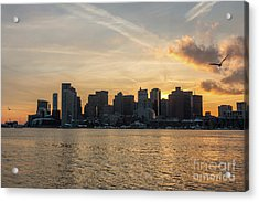 Seagull Flying At Sunset With The Skyline Of Boston On The Backg Acrylic Print