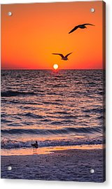 Seagull Hat-trick Acrylic Print