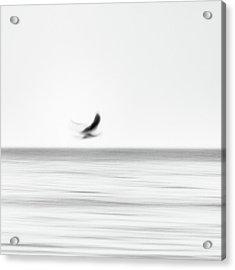 Seagull Acrylic Print by Holger Nimtz